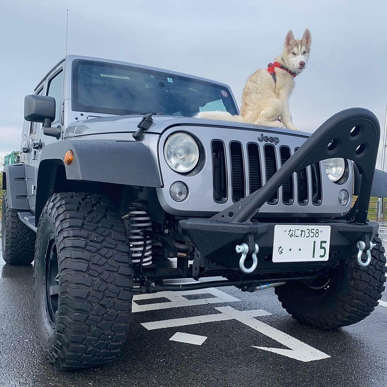 犬とジープ