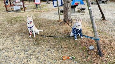 愛犬ハスキーと日帰りBBQに行ってきました【犬とのアウトドア最高】
