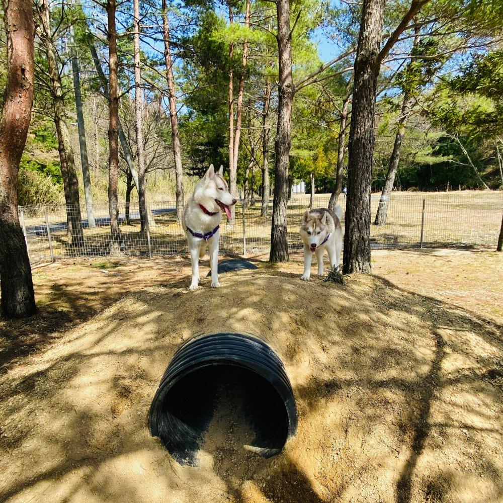 グリム冒険の森ドッグラン