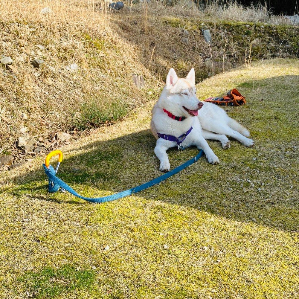 愛犬ハスキーとキャンプ
