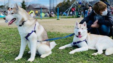 深北緑地ドッグラン【無料】は犬も子供も楽しい公園!オススメです!
