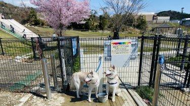 彩都なないろ公園ドッグラン【無料】は犬も子供も楽しい公園!オススメです!