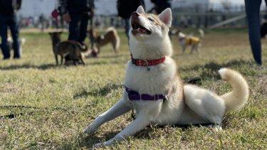 散歩で他の犬に吠えない対策とは?【結論:犬主導の散歩をやめるべき】